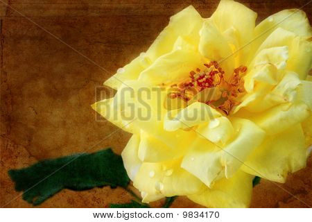 Grungy Yellow Rose