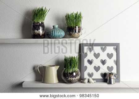 Transparent pots with fresh green grass on shelves