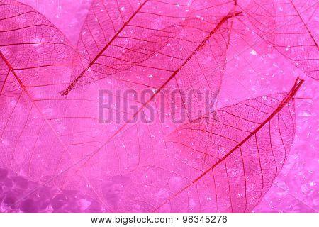 Pink skeleton leaves background