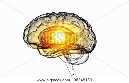 Science image with human brain on white background