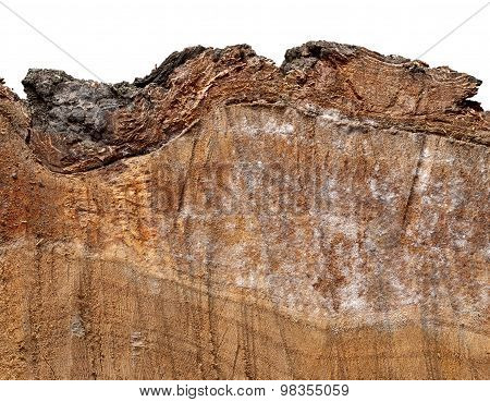 Piece Of Cut Wood With Bark