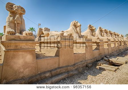 Avenue of ram-headed sphinxes in Luxor, Egypt