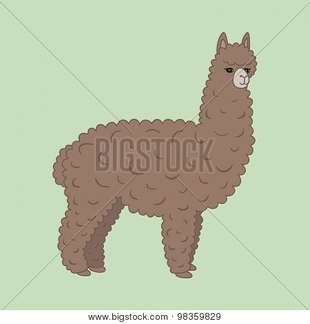 Cute furry brown alpaca.