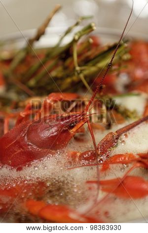 Cooking Crayfish With Herb