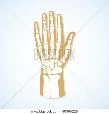Flat design of hand and skeleton.