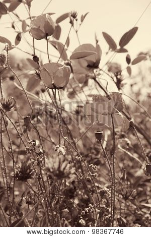 Poppies And Other Wild Flowers On A Green Field In Spring. In Sepia Toned. Retro Style