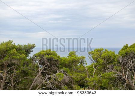 Gnarled Trees And Sea