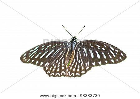 Beautiful Butterfly On Leaf