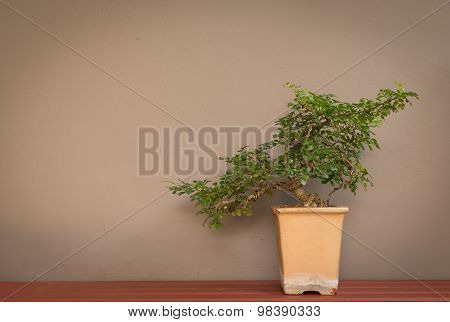 Bonsai Tree In Pot On Wall Background
