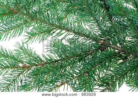 Christmas Tree #3