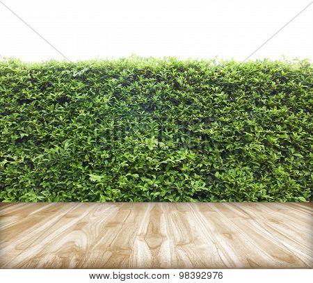 Trees Bushes