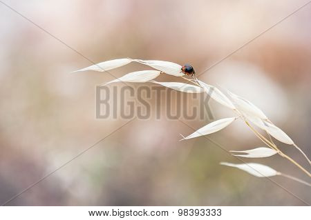 Macro Image Of Ladybug On The Grass