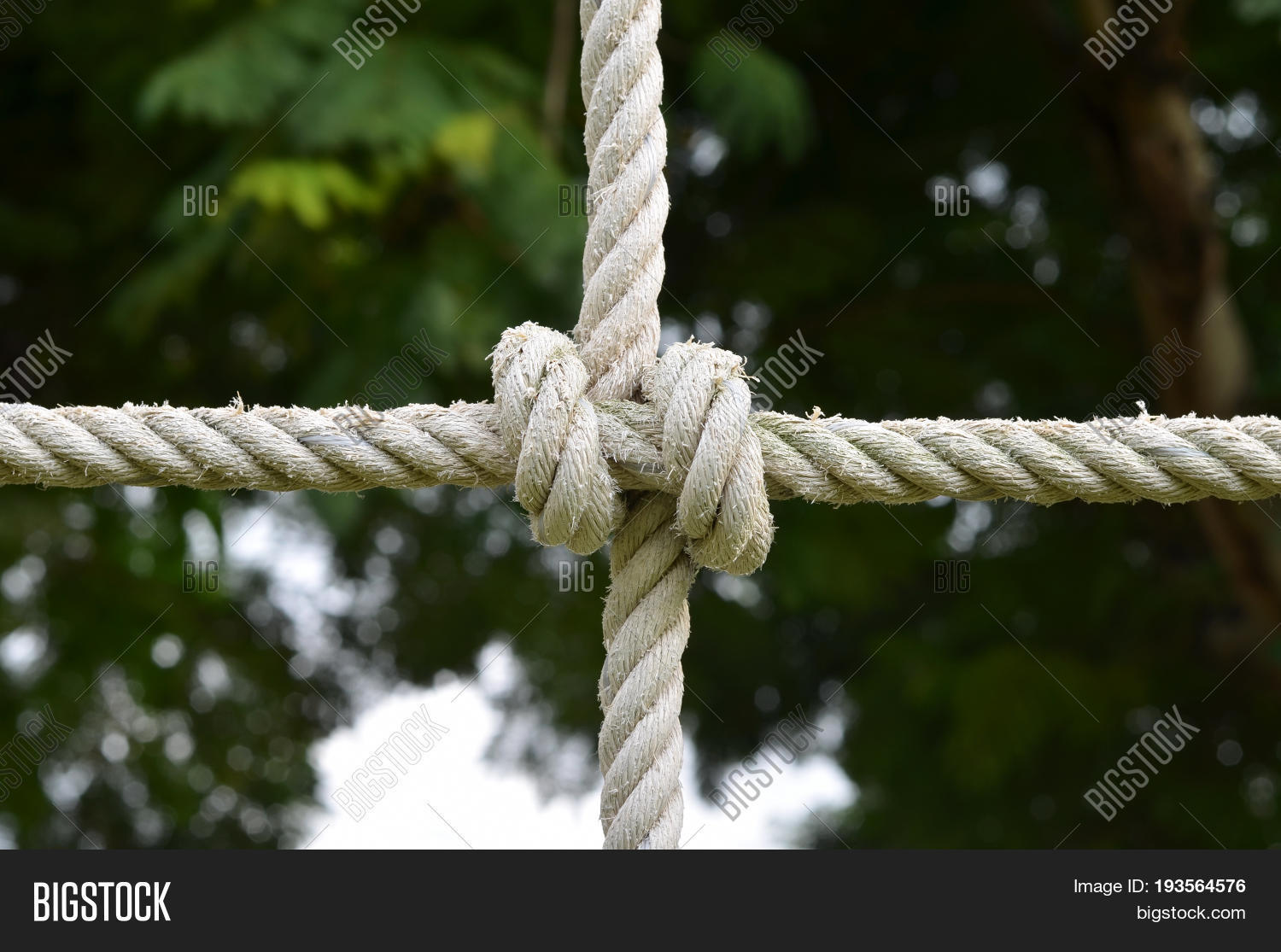 Rope knot line tied together nature image photo bigstock rope knot line tied together with nature backgroundas a symbol for trust teamwork biocorpaavc Choice Image