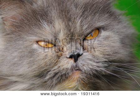 head young fluffy cat closeup