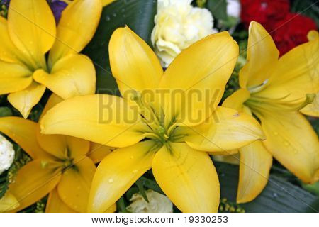 close up lillies