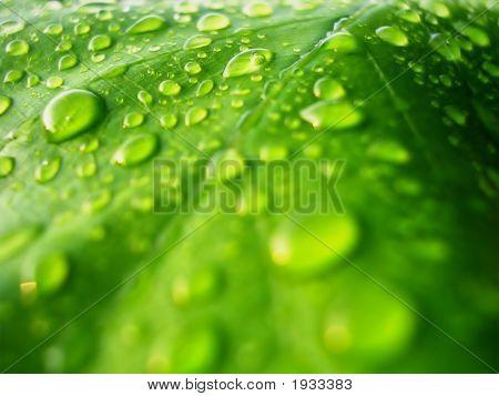Greenleaf001