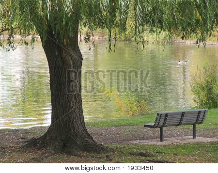 Lonesome Bench