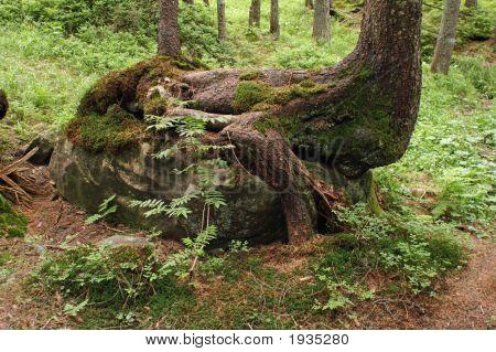 Wood-Animal
