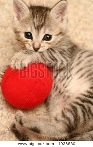 The Grey Kitten Plays A Red Ball