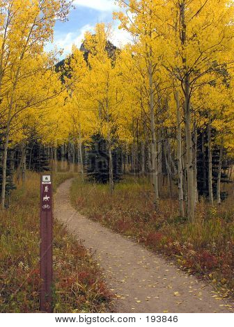 Multiuse Trail In Fall
