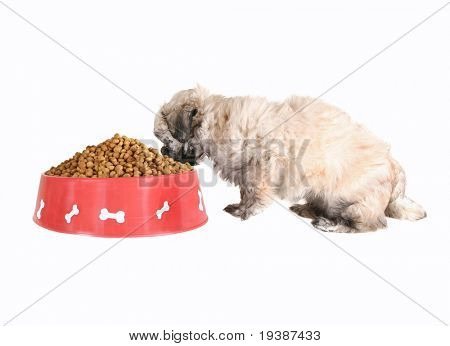 small mixed breed puppy eating out of a bowl