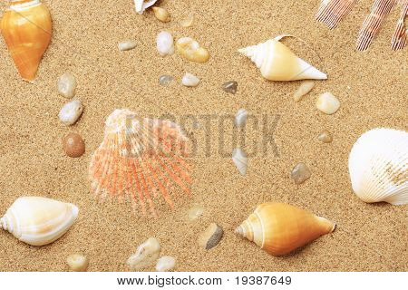 Cockleshells and a starfish lie on sand seacoast