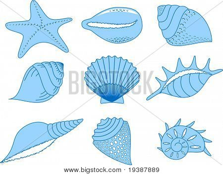 the set of the different cockleshells