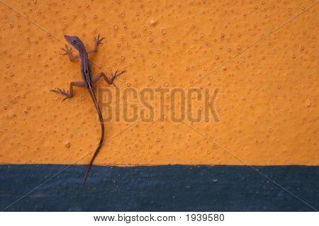 Gecko On Wall