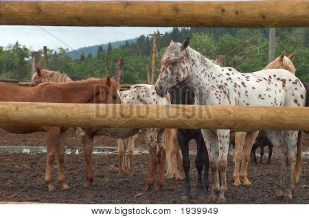 Horse Through
