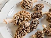 foto of morchella mushrooms  - Freshly picked flavorful morel mushrooms - JPG