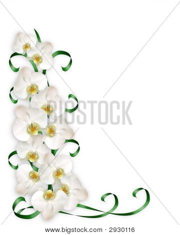 White Orchids And Green Ribbons Border