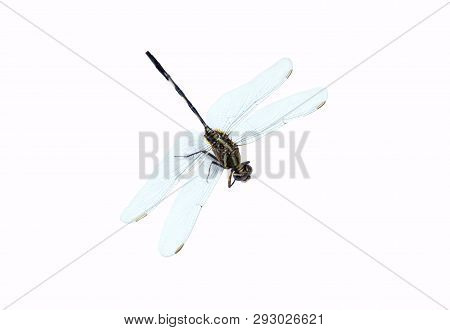 poster of Dragonfly Isolated On White Background.