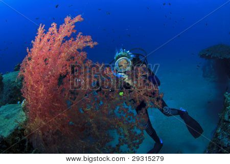Young woman underwater photographer scuba dives in the Red Sea