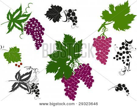 illustration with berry collection isolated on white background