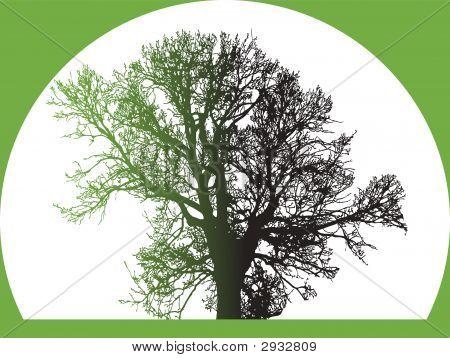 Silhouette Of Big Tree