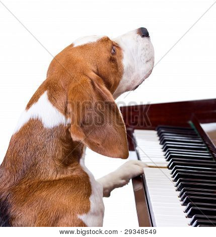 Dog Playing The Piano.