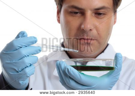 Scientist Or Chemist With Petri Dish
