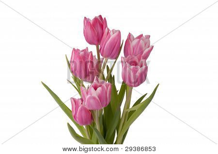 Zoom On A Bunch Of Tulips