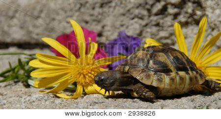 Little Turtle e flores
