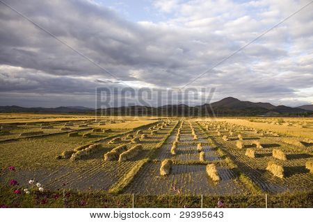 Harvest cropland under cloudy sky in autumn