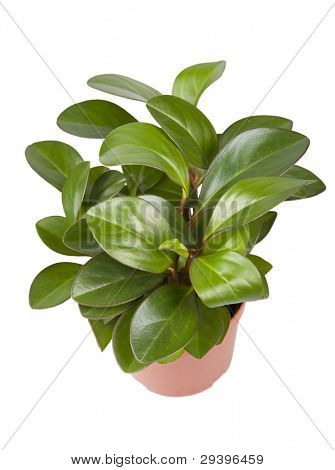 isolated houseplant