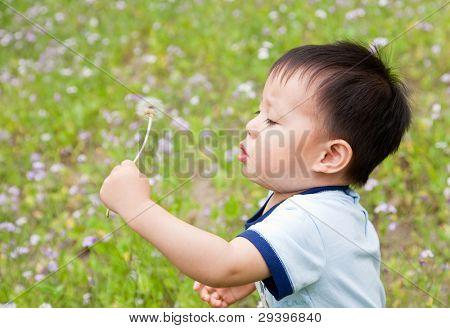 Baby blowing a dandelion