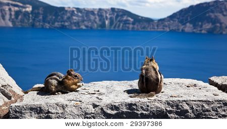 Chipmunks At Crater Lake