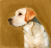 picture of labradors  - oil painting portrait of young yellow labrador in autumn