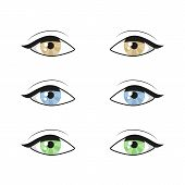 Blue Brown Green Eyes On White Background. Woman Eyes. The Eyes Logo. Human Set Eyes Close Up Vector poster