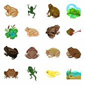 Vector Design Of Frog And Anuran Logo. Set Of Frog And Animal Stock Vector Illustration. poster