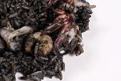 foto of negro  - Arroz negro traditional Spanish seafood rice cooked with squid ink - JPG