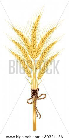Ears of wheat.vector