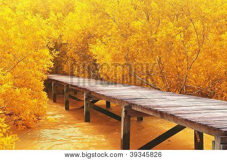 Wood Bridge&yellow Mangrove Forest.