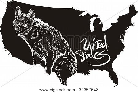 Coyote And U.s. Outline Map